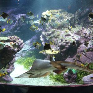 la-cite-de-la-mer-aquarium-caledonien