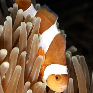 la-cite-de-la-mer-poisson-clown
