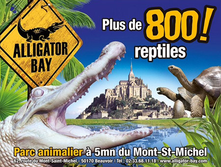 alligator-bay