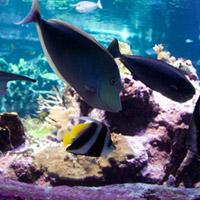 bloc-aquarium