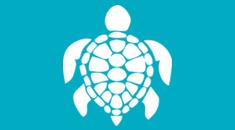 la cité de la mer centre tortue marine Manche Normandie
