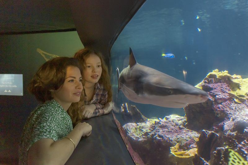 Devant l'aquarium abyssal de la cité de la Mer